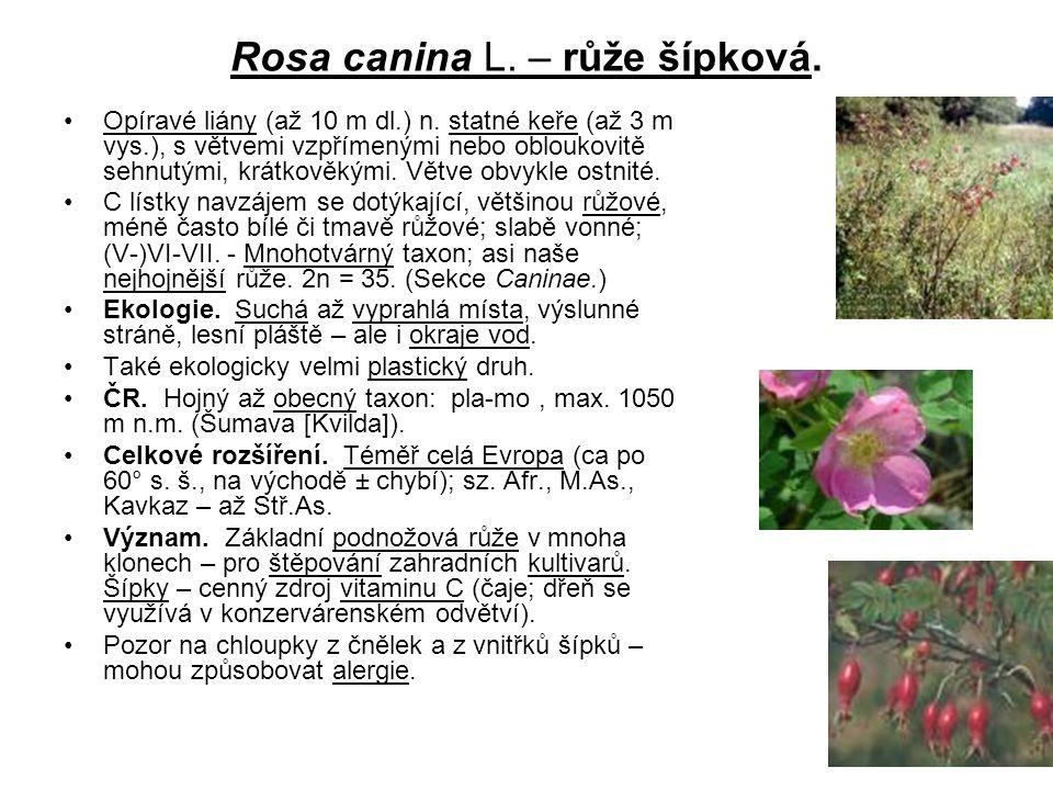 Rosa canina L. – růže šípková.