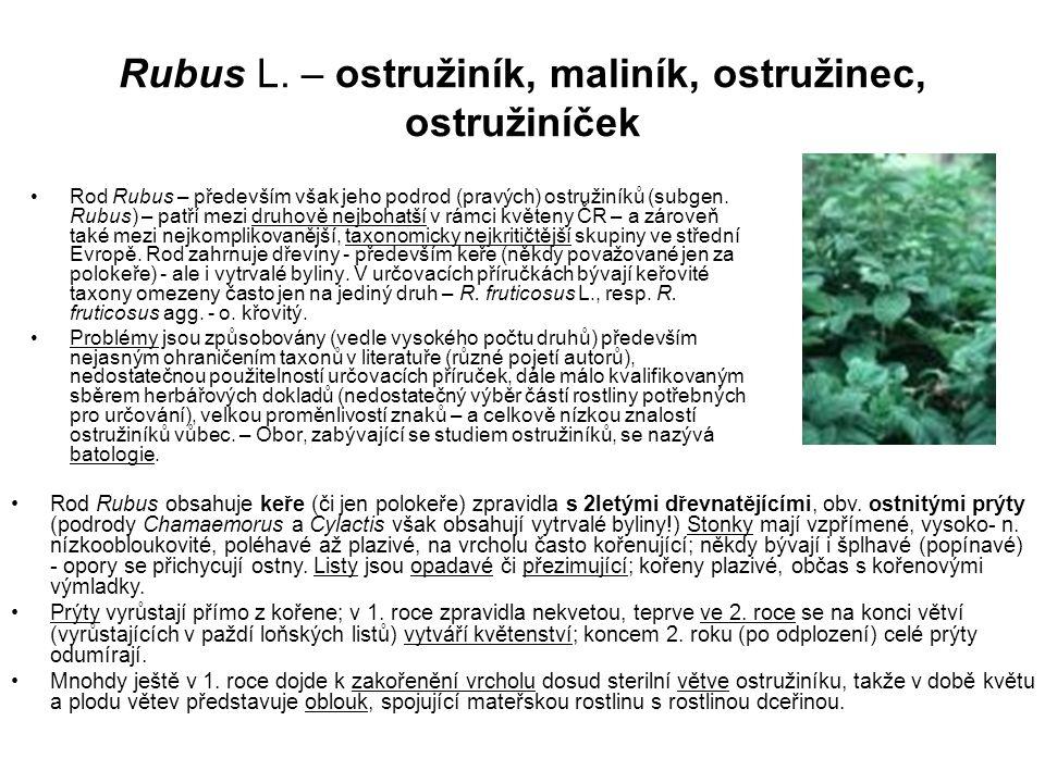 Rubus L. – ostružiník, maliník, ostružinec, ostružiníček