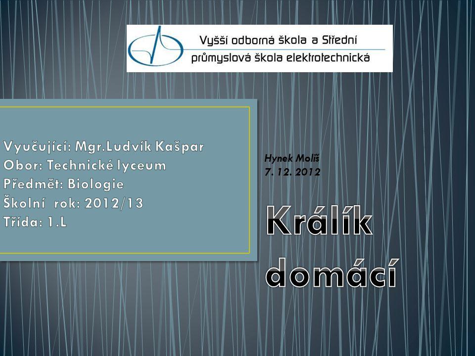 Hynek Moliš 7. 12. 2012 Králík domácí