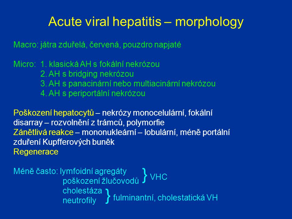 Acute viral hepatitis – morphology