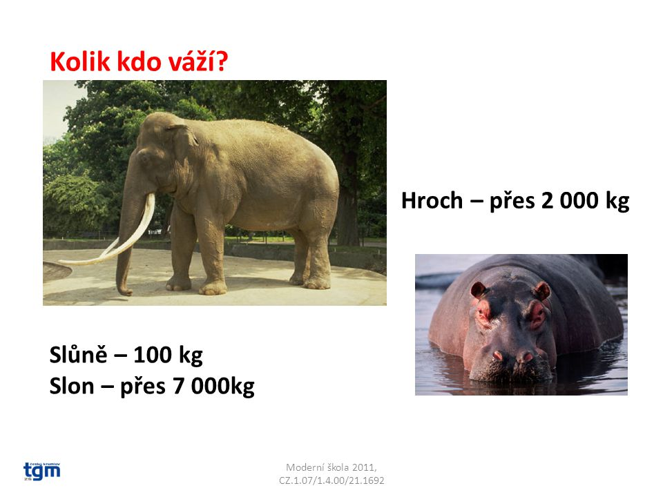 Kolik kdo váží Hroch – přes 2 000 kg Slůně – 100 kg