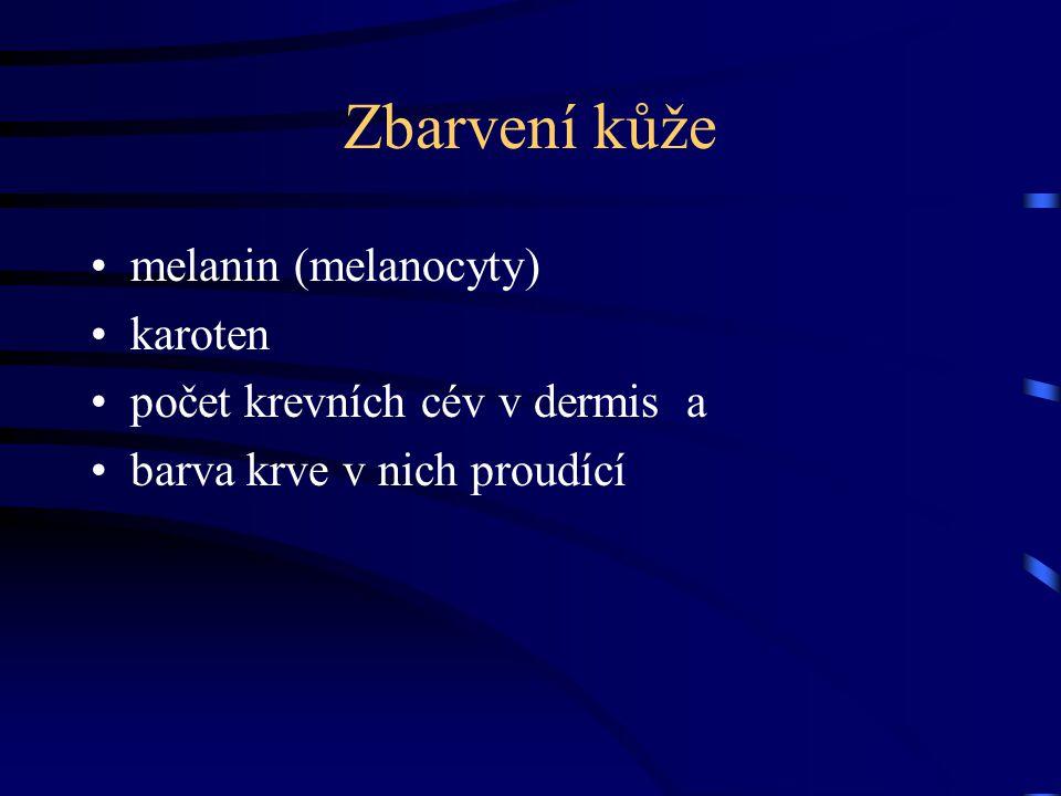 Zbarvení kůže melanin (melanocyty) karoten