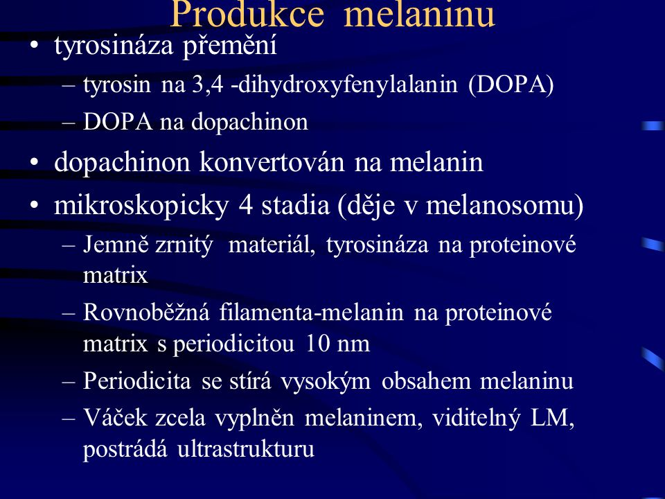 Produkce melaninu tyrosináza přemění dopachinon konvertován na melanin