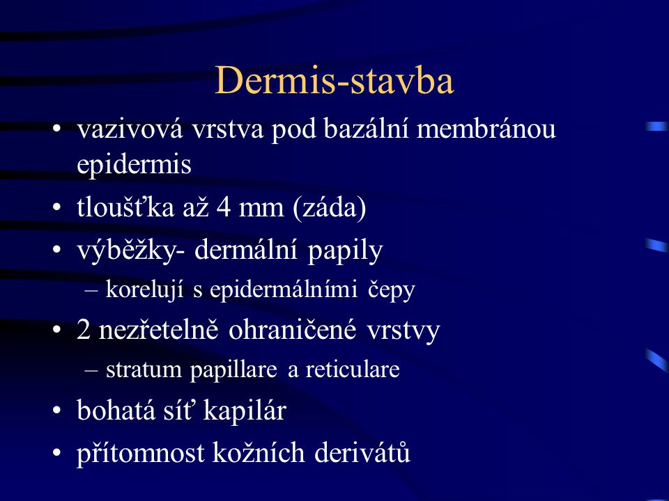 Dermis-stavba vazivová vrstva pod bazální membránou epidermis