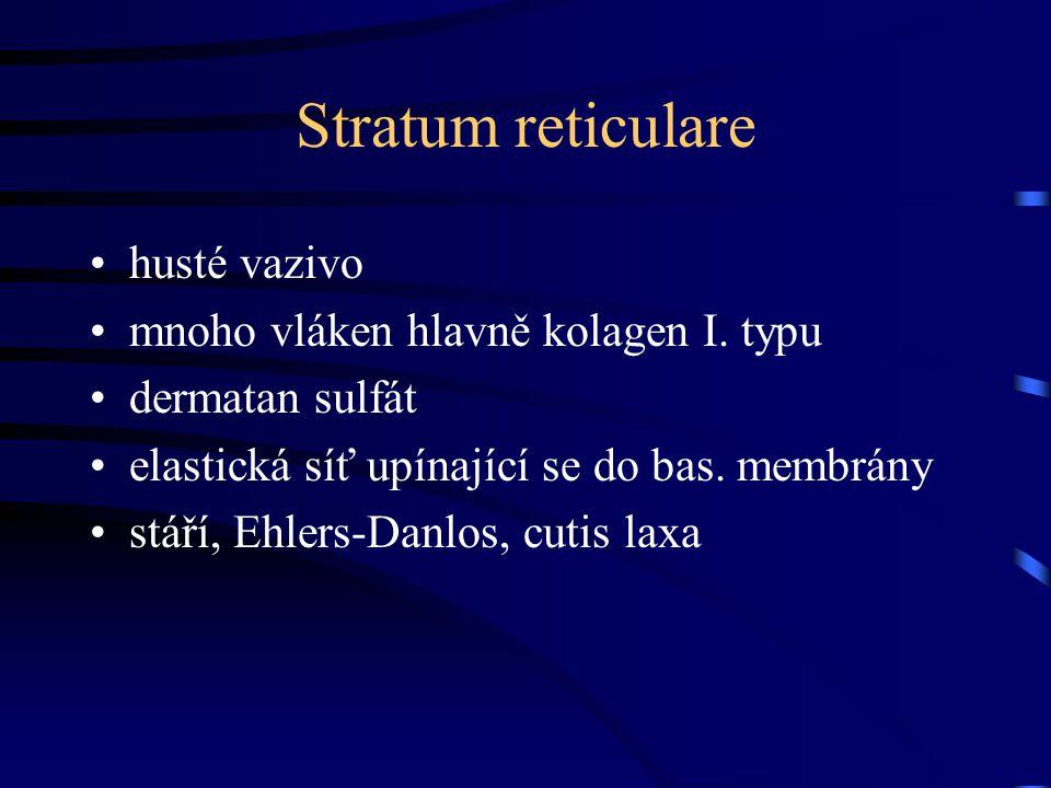 Stratum reticulare husté vazivo mnoho vláken hlavně kolagen I. typu