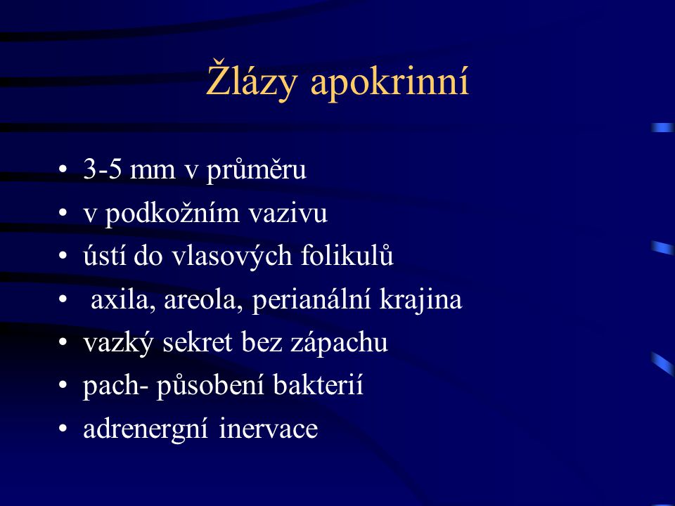 Žlázy apokrinní 3-5 mm v průměru v podkožním vazivu
