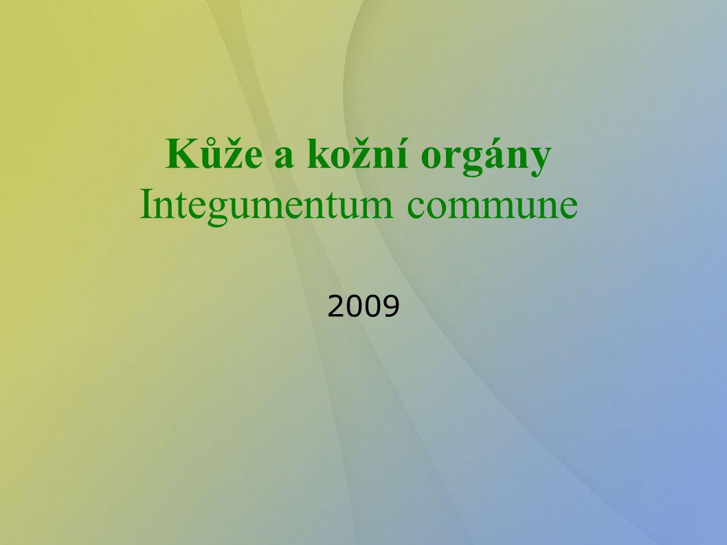 Kůže a kožní orgány Integumentum commune