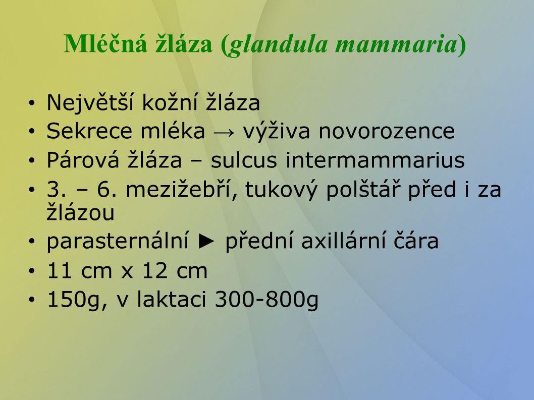 Mléčná žláza (glandula mammaria)