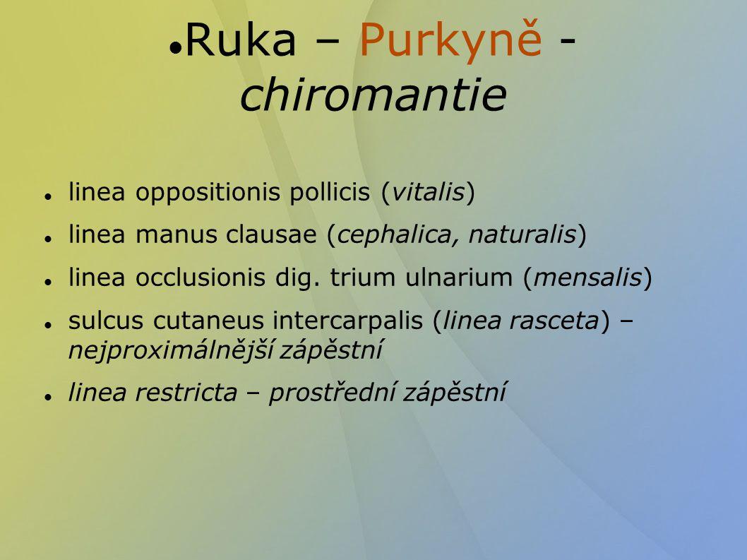 Ruka – Purkyně - chiromantie