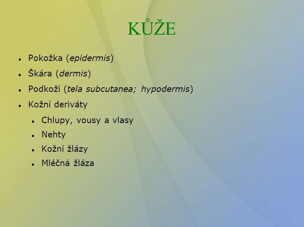 KŮŽE Pokožka (epidermis) Škára (dermis)