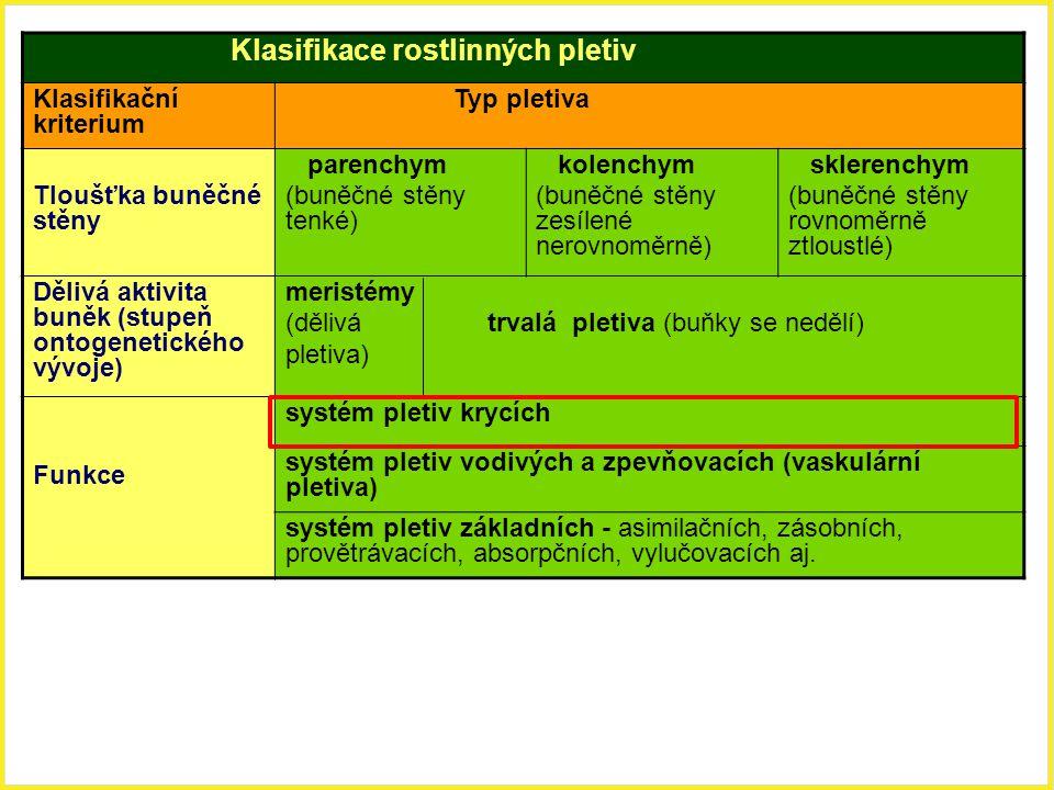 Klasifikace rostlinných pletiv