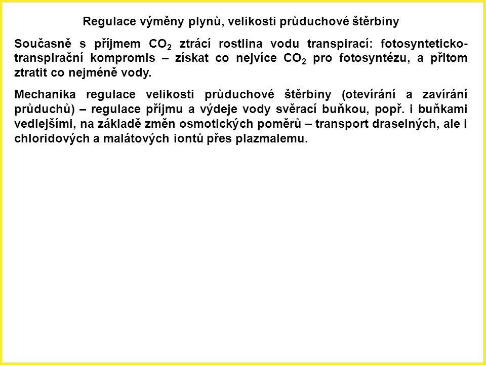 Regulace výměny plynů, velikosti průduchové štěrbiny