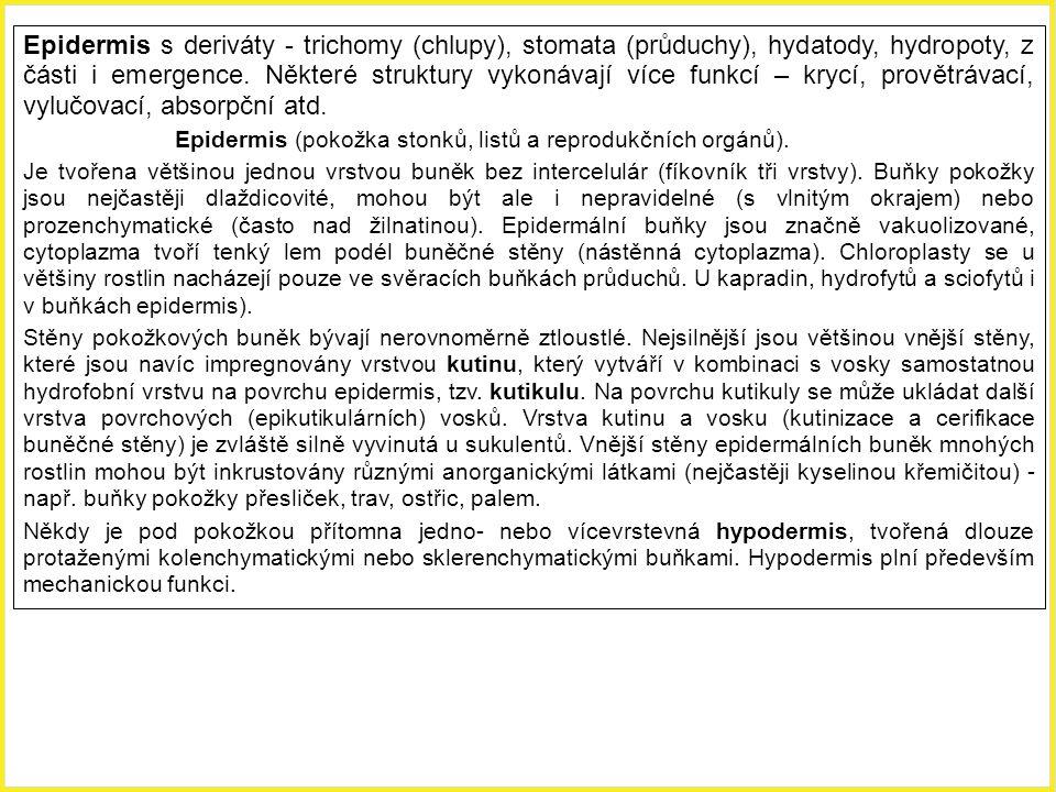 Epidermis s deriváty - trichomy (chlupy), stomata (průduchy), hydatody, hydropoty, z části i emergence. Některé struktury vykonávají více funkcí – krycí, provětrávací, vylučovací, absorpční atd.