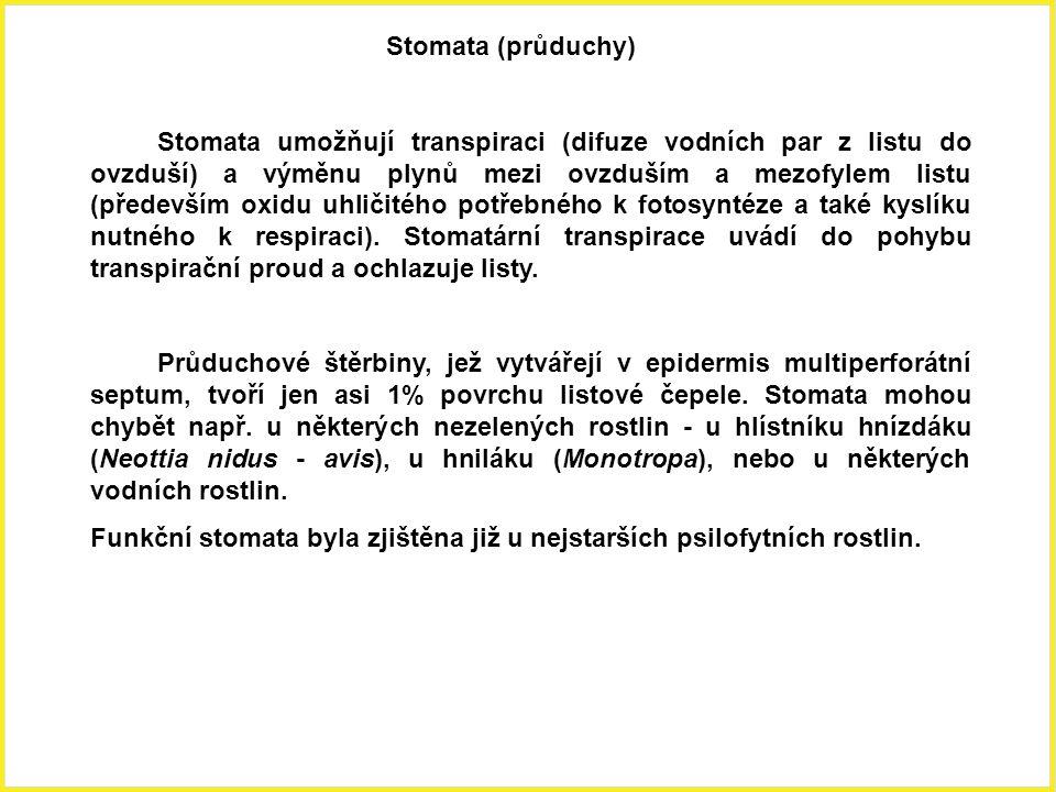Stomata (průduchy)