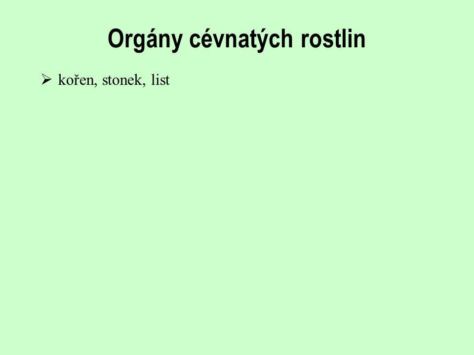 Orgány cévnatých rostlin