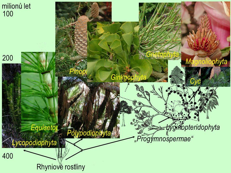 milionů let Pinophyta. Gnetophyta. Magnoliophyta. 100. Ginkgophyta. Cycadophyta. Rhyniové rostliny.