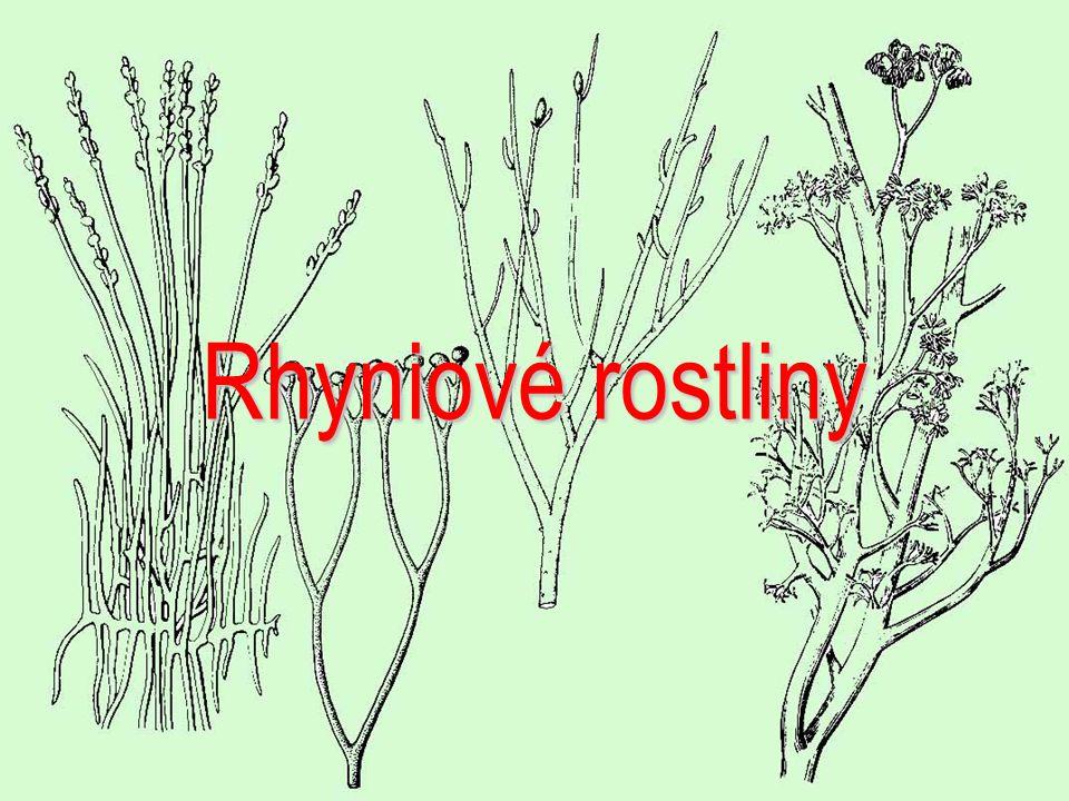 Rhyniové rostliny