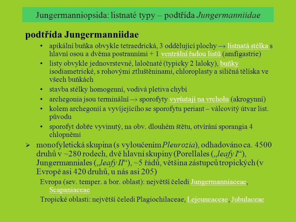 Jungermanniopsida: listnaté typy – podtřída Jungermanniidae