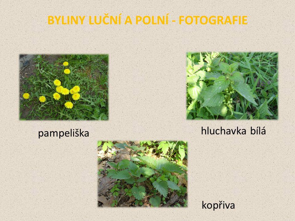 BYLINY LUČNÍ A POLNÍ - FOTOGRAFIE