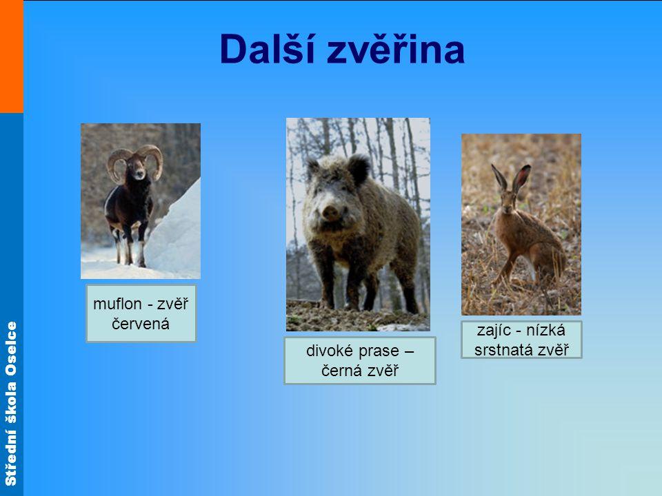 Další zvěřina muflon - zvěř červená zajíc - nízká srstnatá zvěř