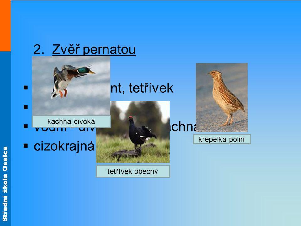 lesní - bažant, tetřívek polní - koroptev vodní - divoká husa, kachna