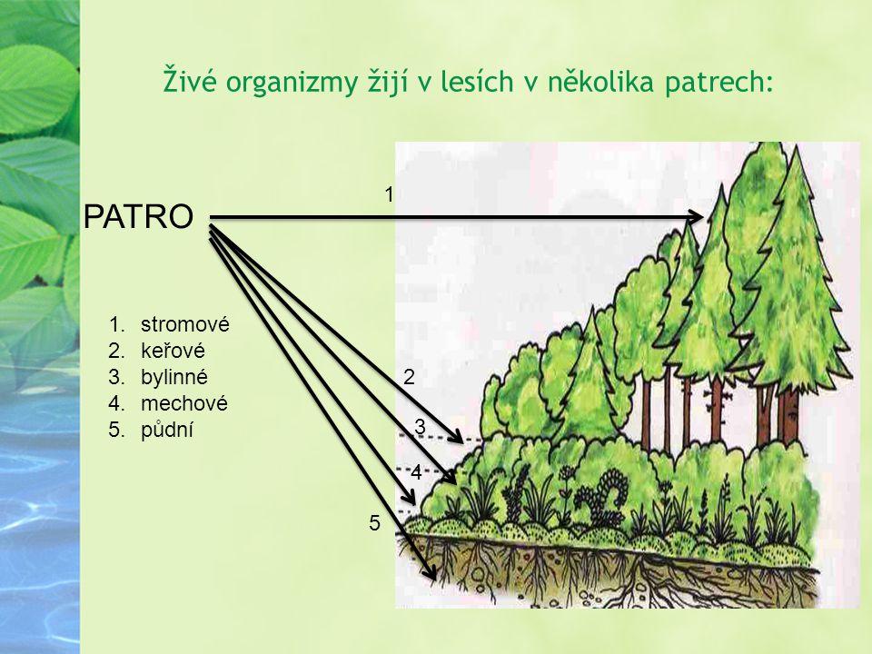 Živé organizmy žijí v lesích v několika patrech: