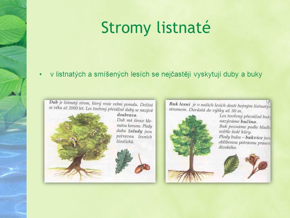 Stromy listnaté v listnatých a smíšených lesích se nejčastěji vyskytují duby a buky