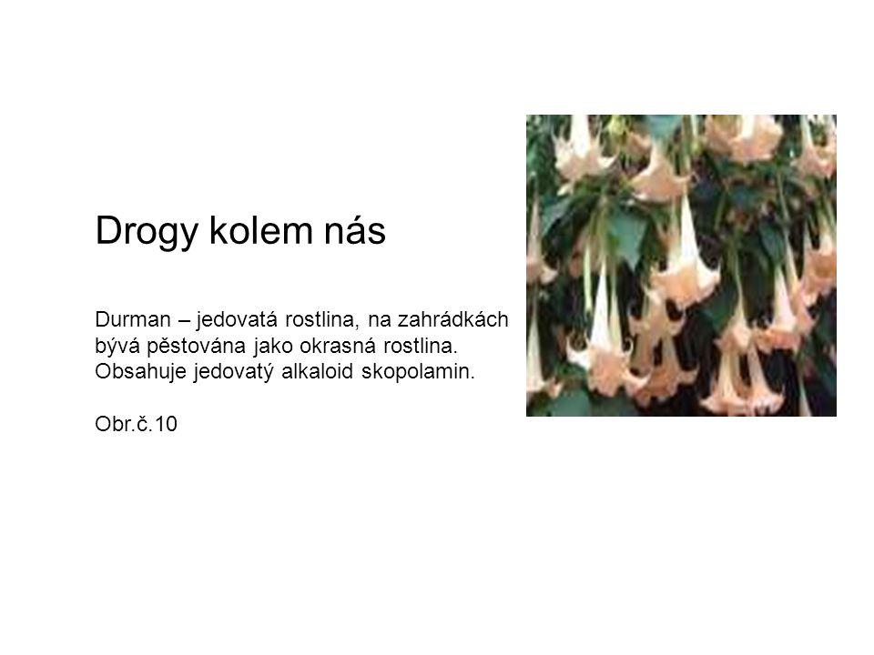 Drogy kolem nás Durman – jedovatá rostlina, na zahrádkách bývá pěstována jako okrasná rostlina. Obsahuje jedovatý alkaloid skopolamin.