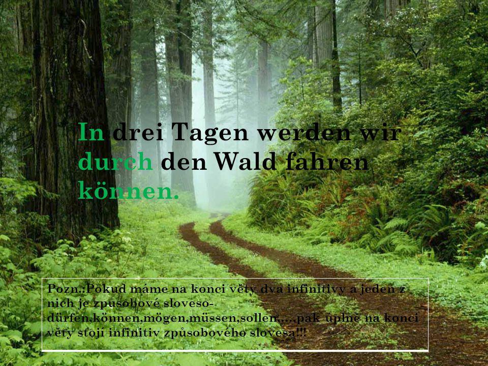 In drei Tagen werden wir durch den Wald fahren können.
