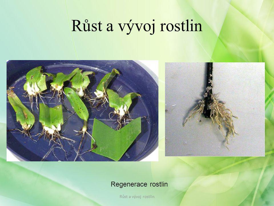 Růst a vývoj rostlin Regenerace rostlin Růst a vývoj rostlin