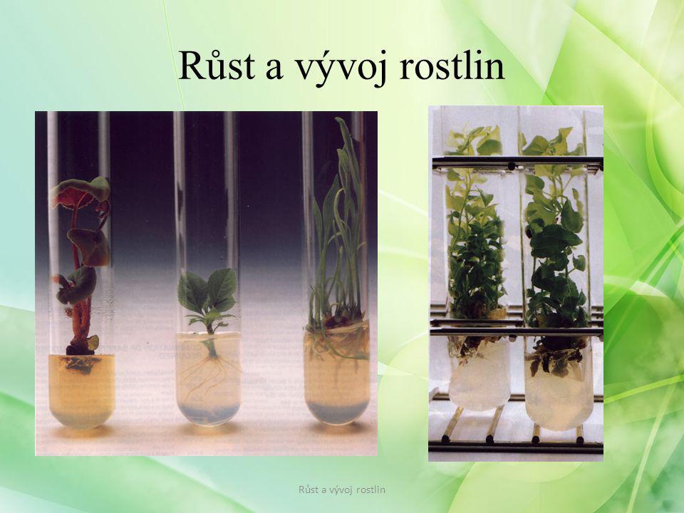 Růst a vývoj rostlin Růst a vývoj rostlin