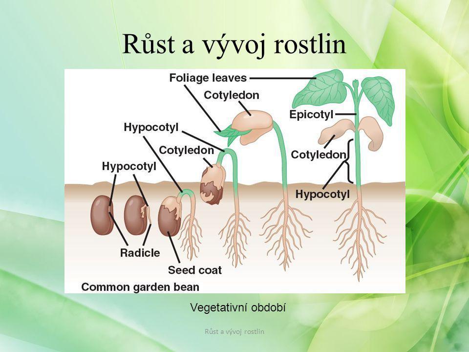 Růst a vývoj rostlin Vegetativní období Růst a vývoj rostlin