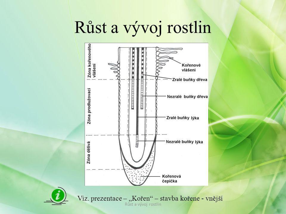 """Růst a vývoj rostlin Viz. prezentace – """"Kořen – stavba kořene - vnější Růst a vývoj rostlin"""