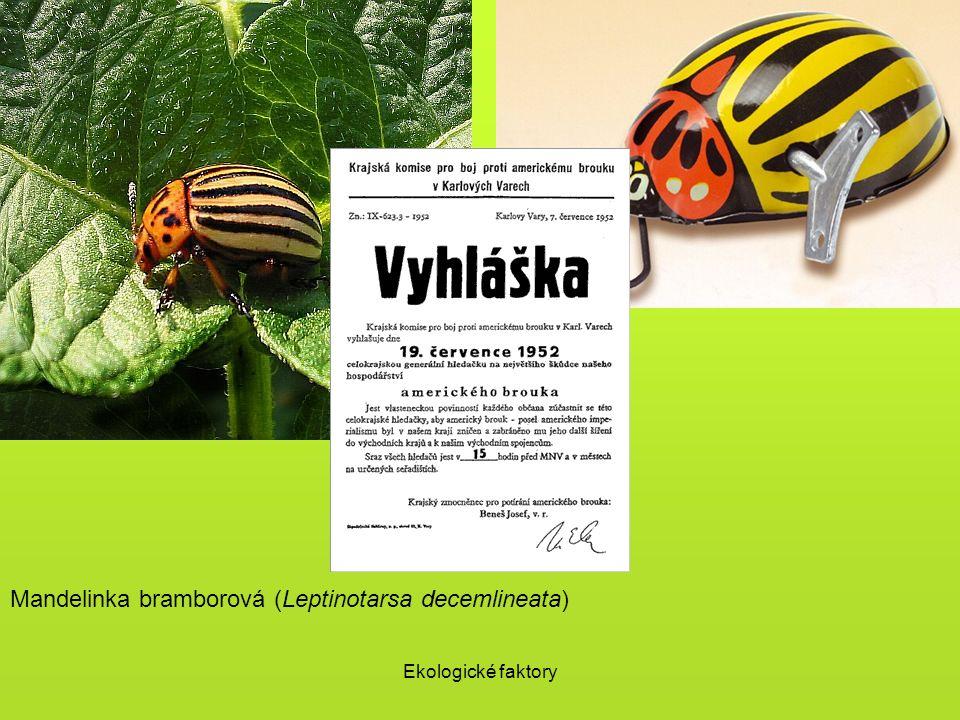 Mandelinka bramborová (Leptinotarsa decemlineata)