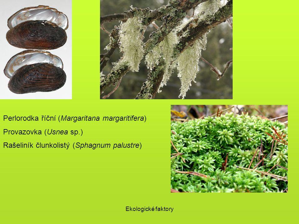 Perlorodka říční (Margaritana margaritifera) Provazovka (Usnea sp.)