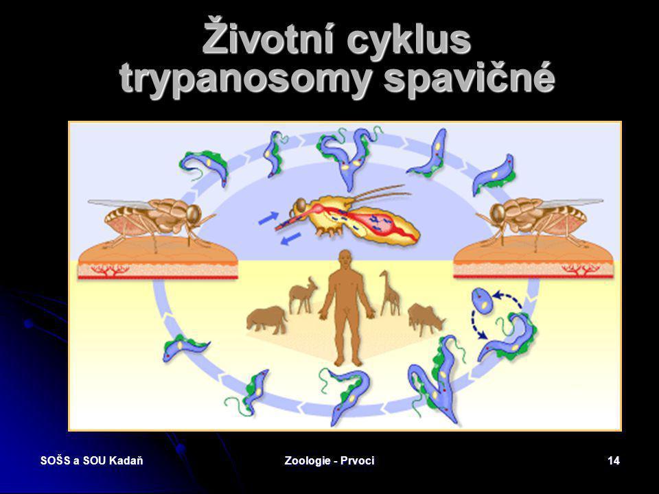Životní cyklus trypanosomy spavičné