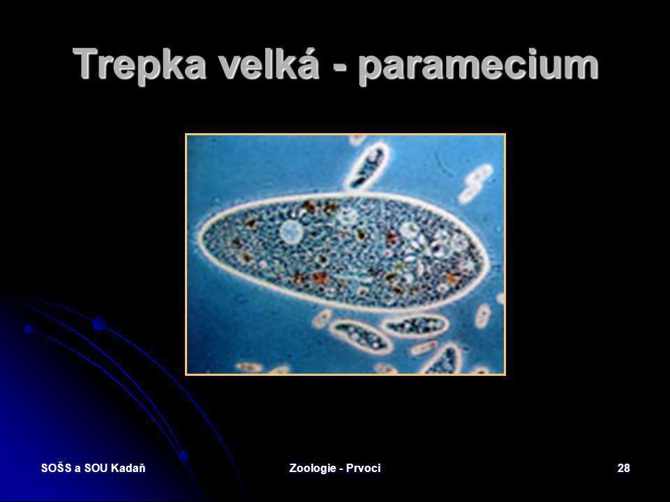 Trepka velká - paramecium