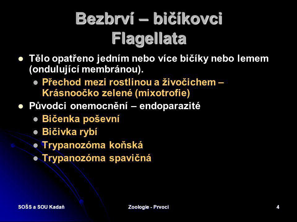 Bezbrví – bičíkovci Flagellata