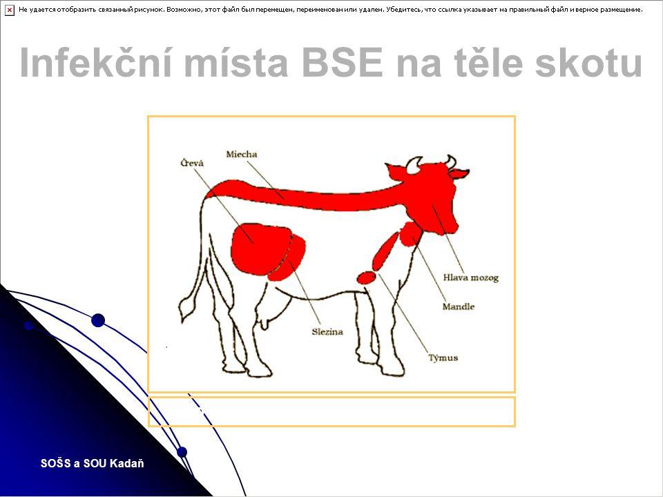 Infekční místa BSE na těle skotu