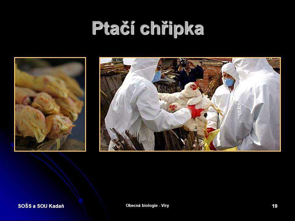 Ptačí chřipka SOŠS a SOU Kadaň Obecná biologie - Viry