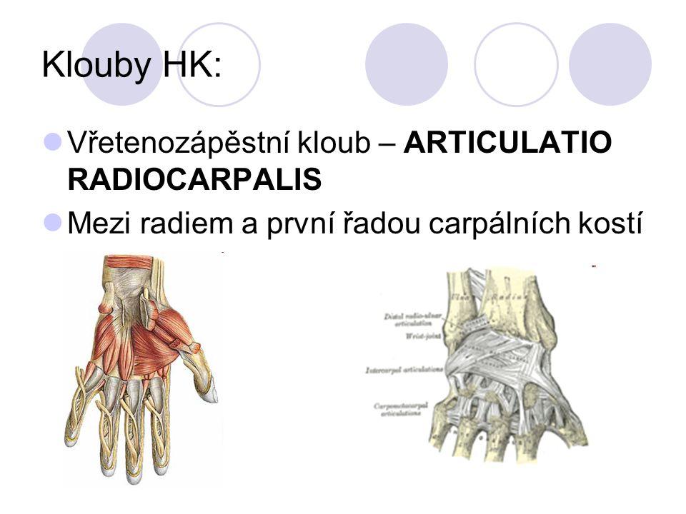 Klouby HK: Vřetenozápěstní kloub – ARTICULATIO RADIOCARPALIS