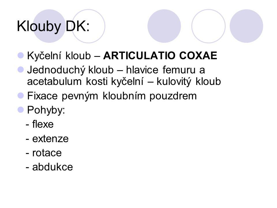 Klouby DK: Kyčelní kloub – ARTICULATIO COXAE