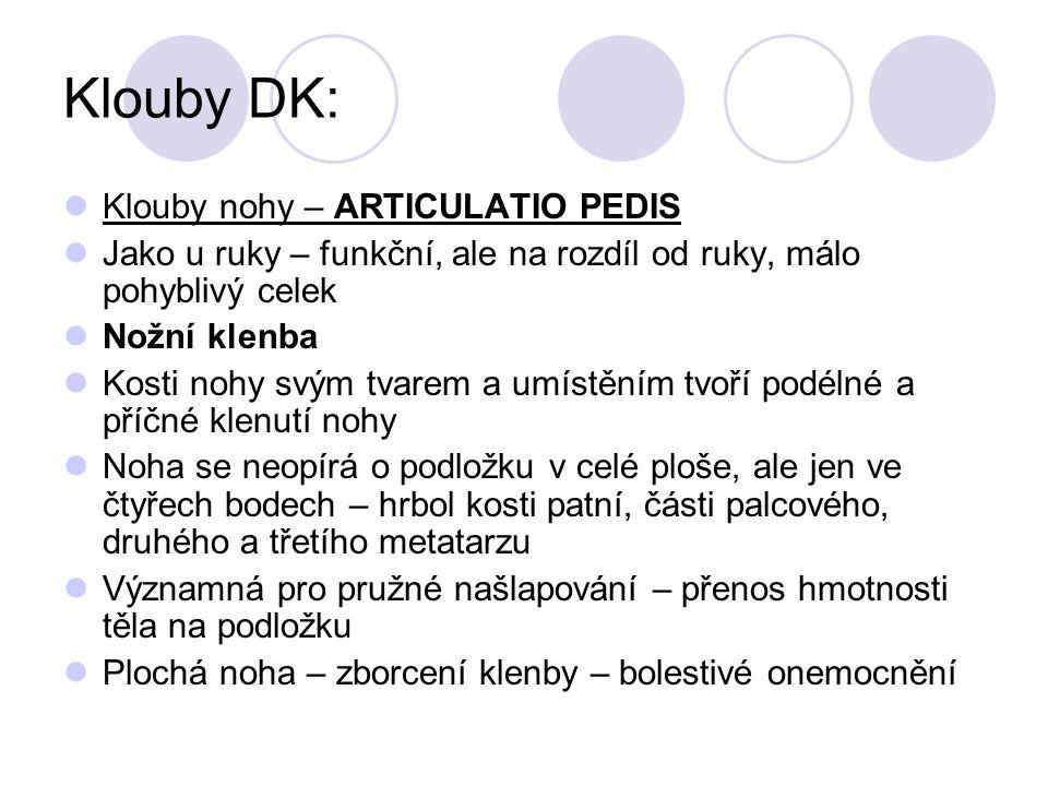 Klouby DK: Klouby nohy – ARTICULATIO PEDIS