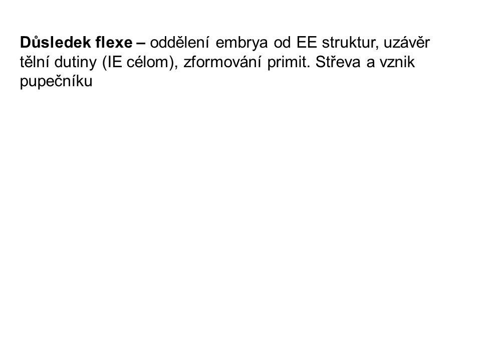 Důsledek flexe – oddělení embrya od EE struktur, uzávěr tělní dutiny (IE célom), zformování primit.