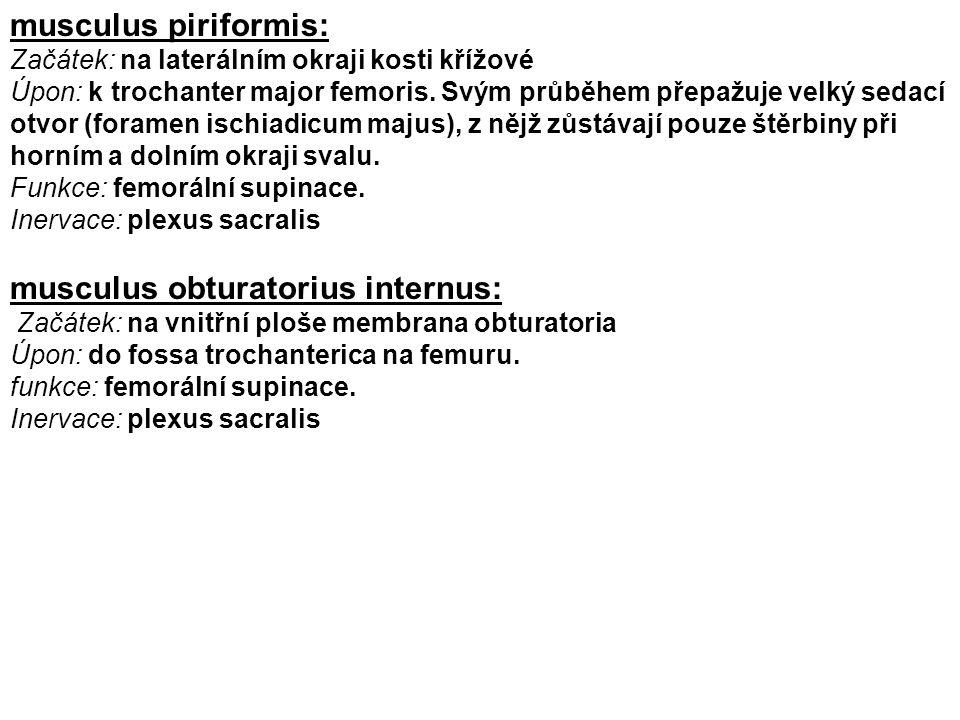 musculus obturatorius internus: