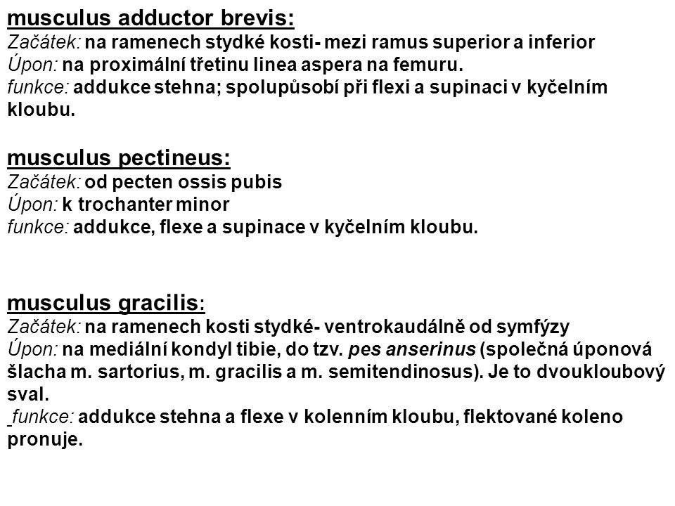 musculus adductor brevis: