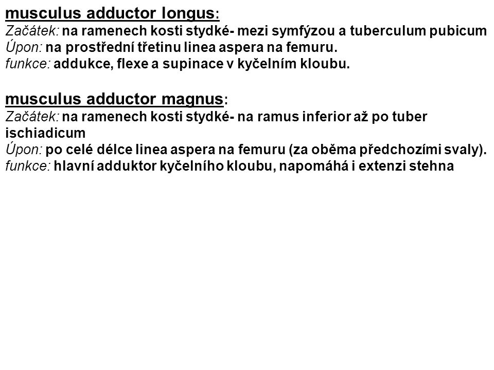 musculus adductor longus: