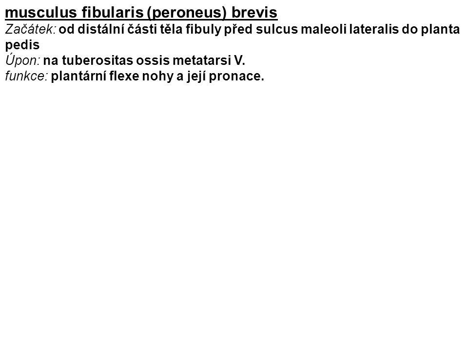 musculus fibularis (peroneus) brevis