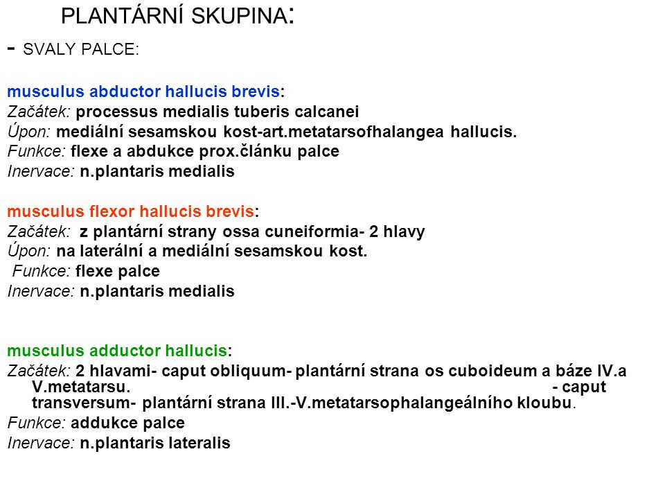 - SVALY PALCE: PLANTÁRNÍ SKUPINA: musculus abductor hallucis brevis: