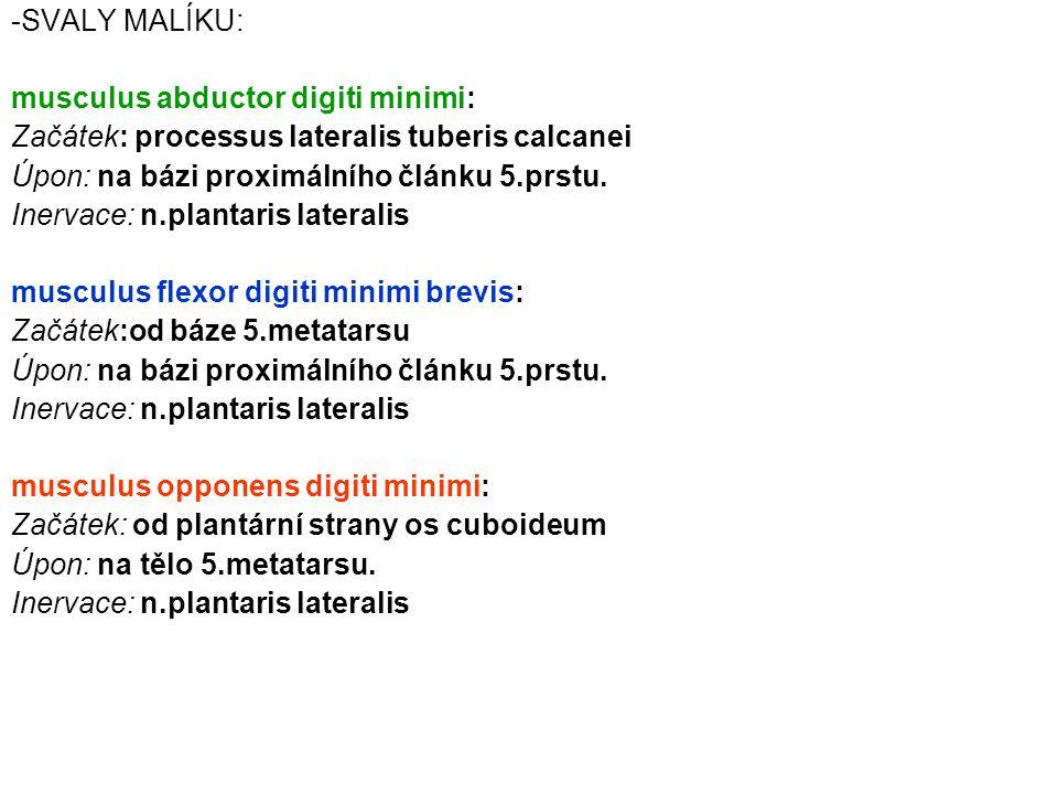 SVALY MALÍKU: musculus abductor digiti minimi: Začátek: processus lateralis tuberis calcanei. Úpon: na bázi proximálního článku 5.prstu.